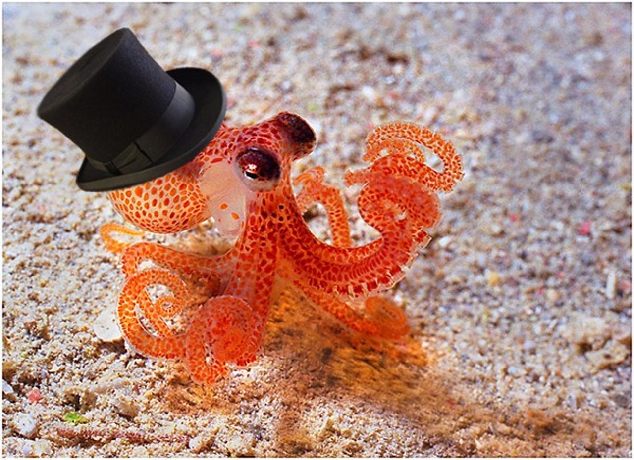Tiny octopus in a top hat.