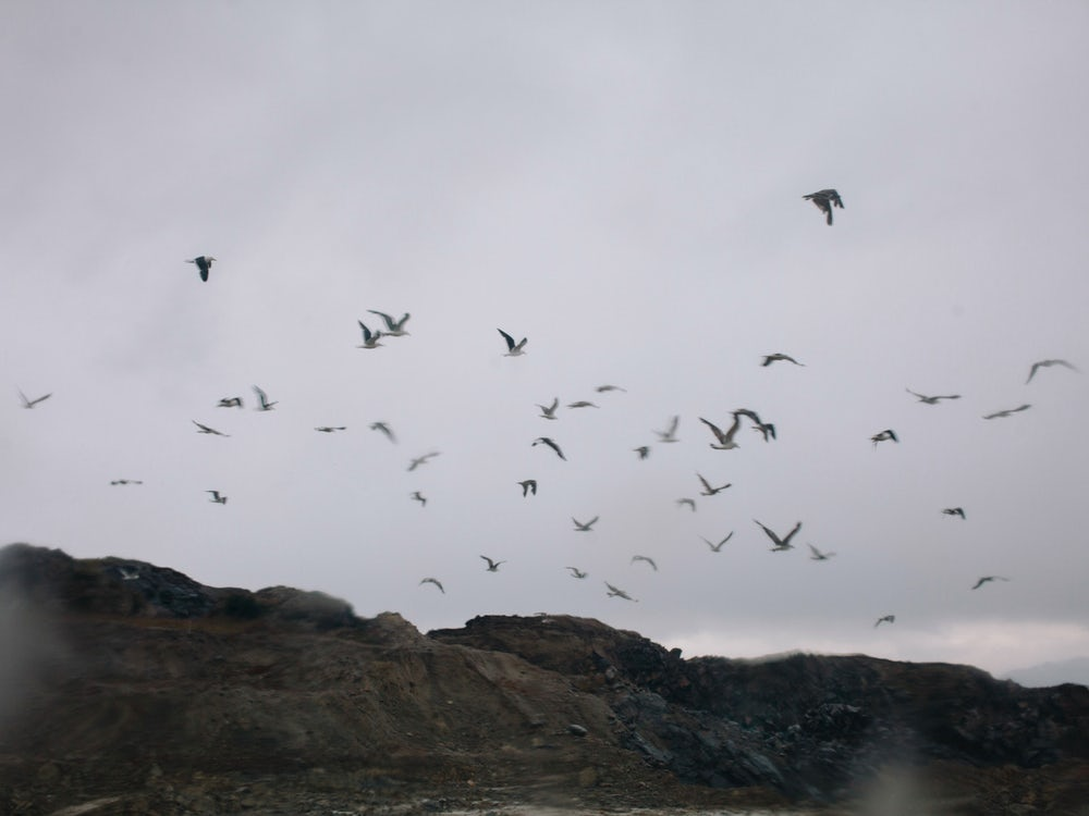 A flock of seagulls over a landfill in Ushuaia.