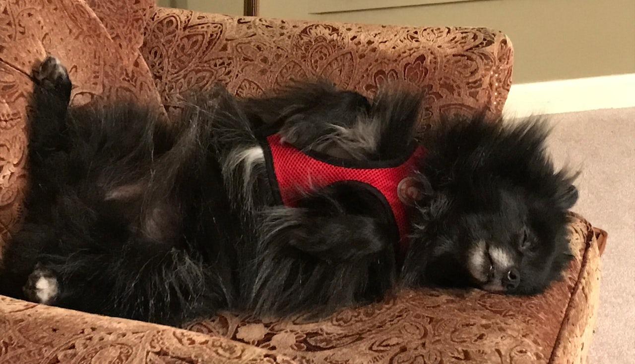 The author's rescue dog, Nora