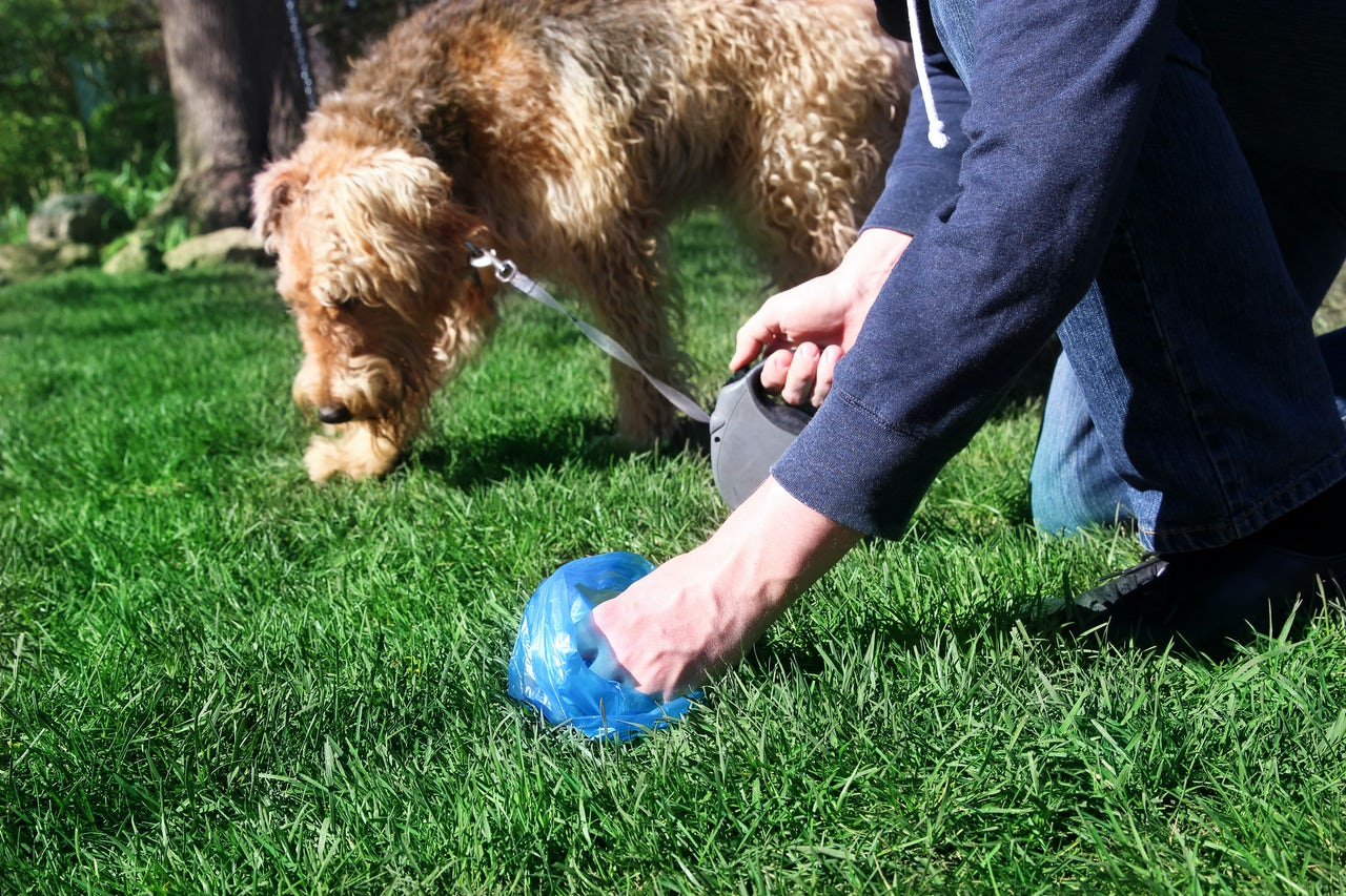 New York's pooper scooper laws don't do diddly about dog
