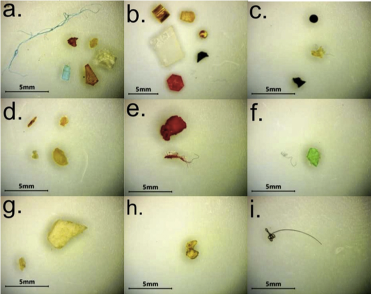 Samples of microplastics found at nine different beach locaitons along the Northern Gulf of Mexico coastline.
