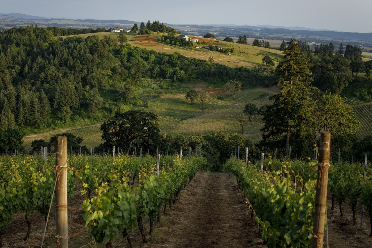 Momtazi's vineyard in Yamhill County, Oregon.