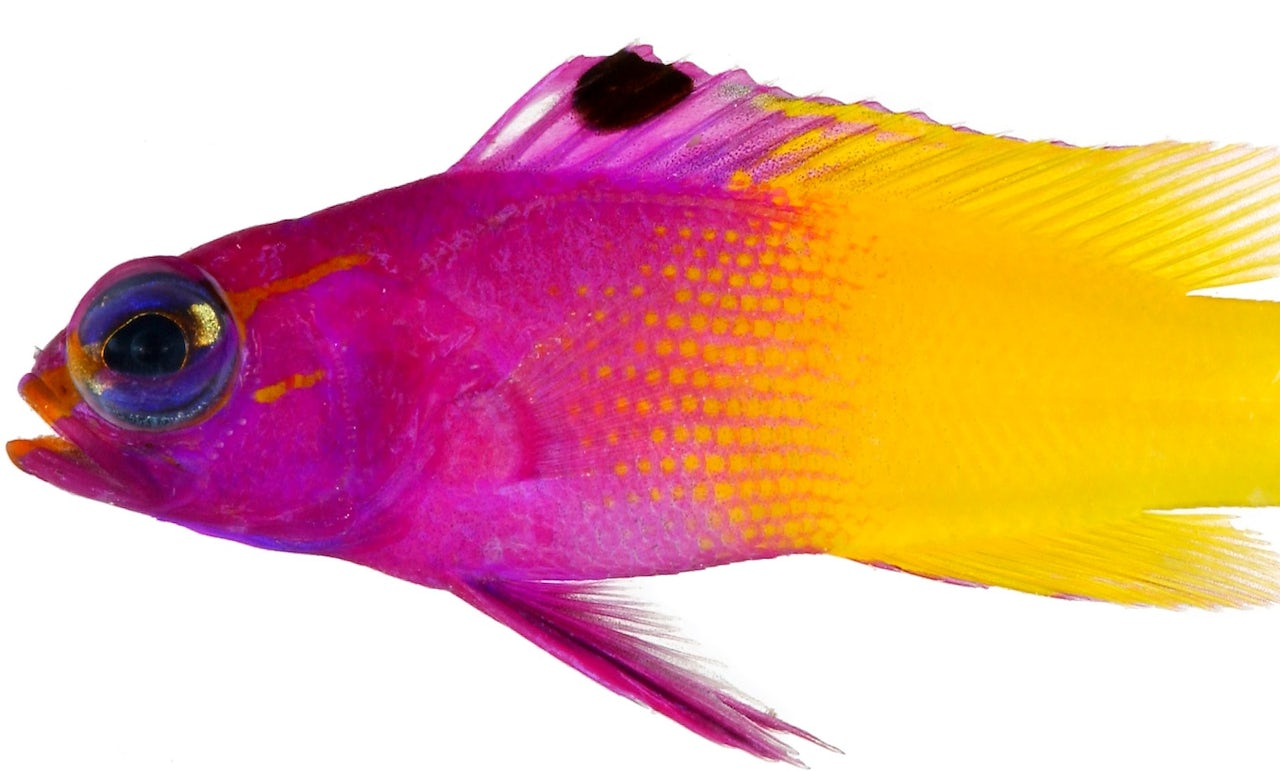 The aesthetics of tropical fish prove that nature is the best graphic designer