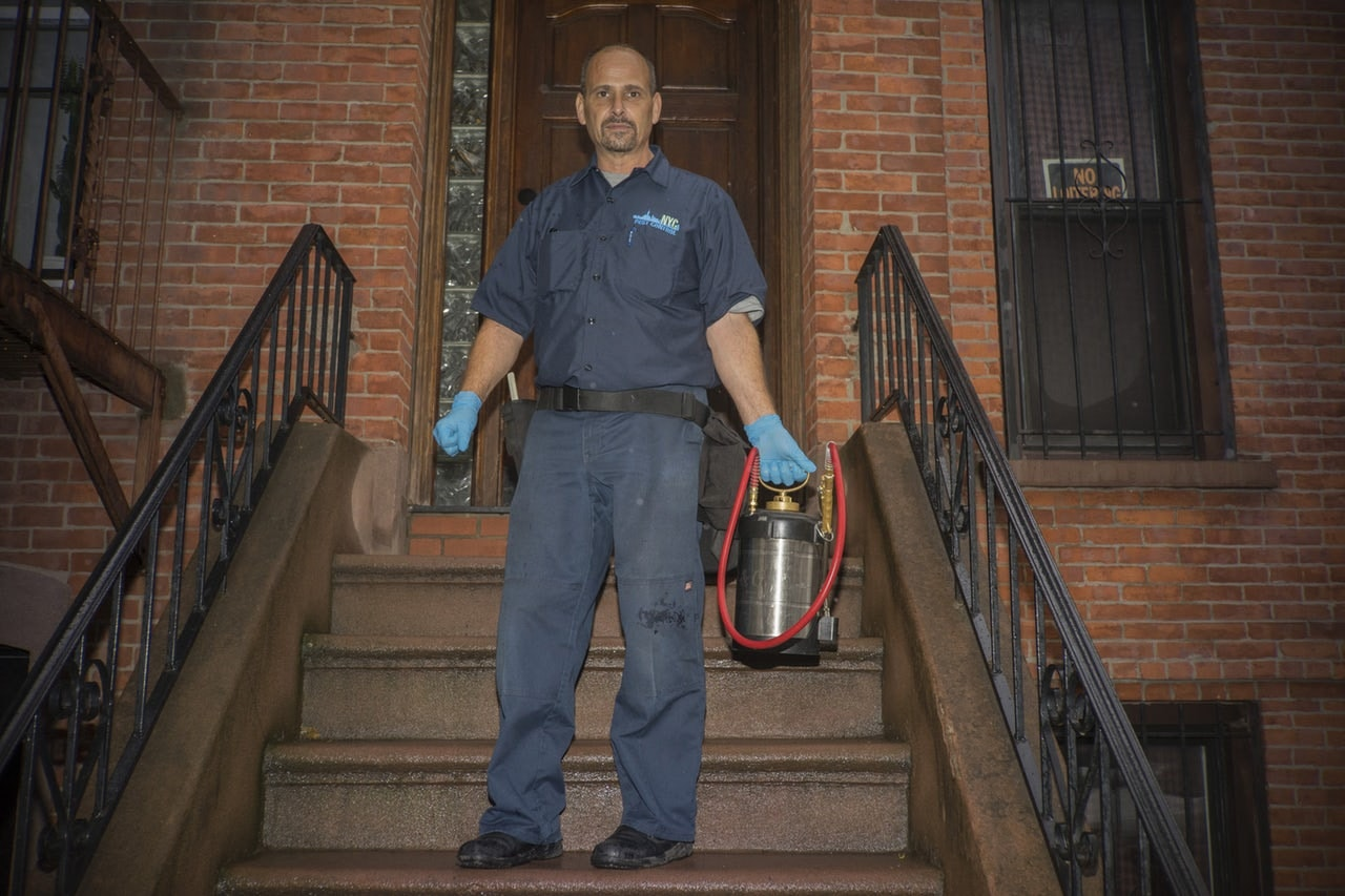 The bed-bug whisperer of Brooklyn