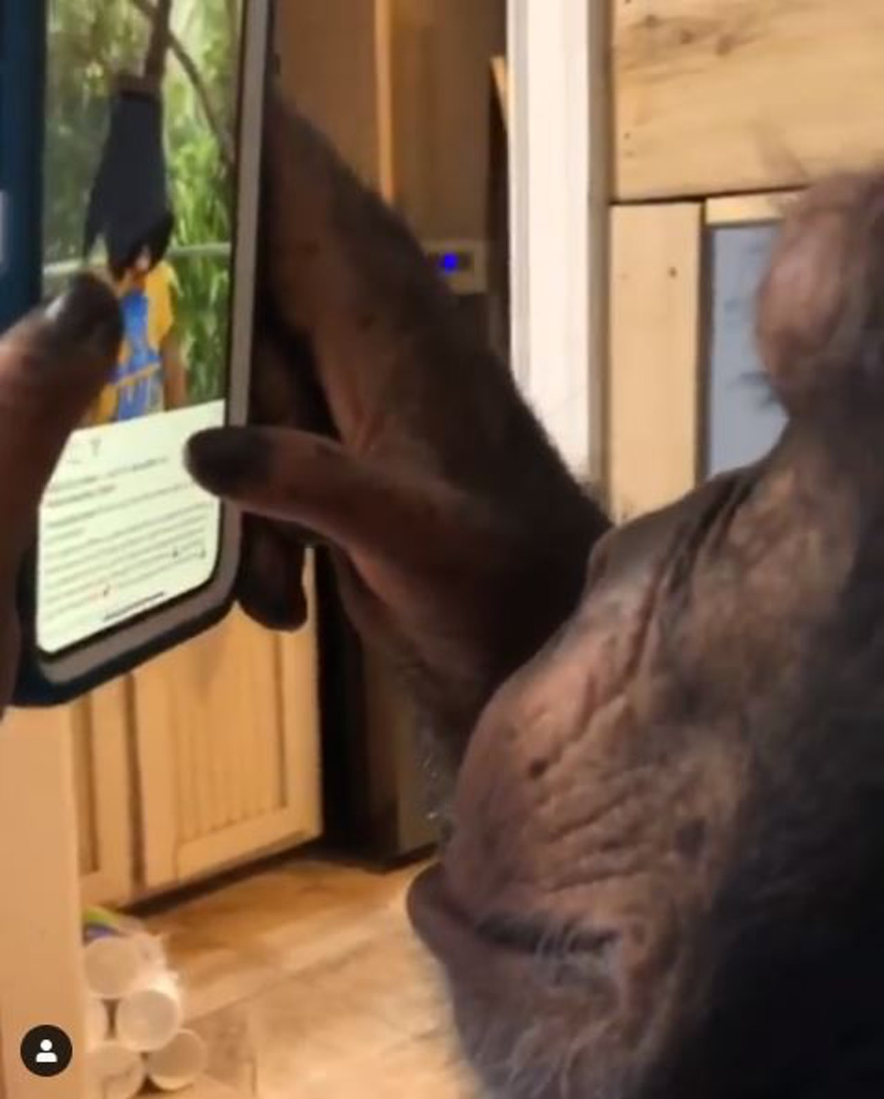 Watching this chimp use Instagram like a bored teen makes me feel bad