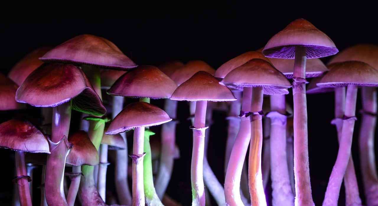 Taking mushrooms for depression cured me of my atheism | The Outline