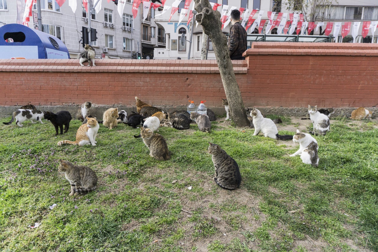 Turkey has so, so many cats | The Outline